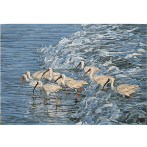 Ibis in The Surf, Giclee Art
