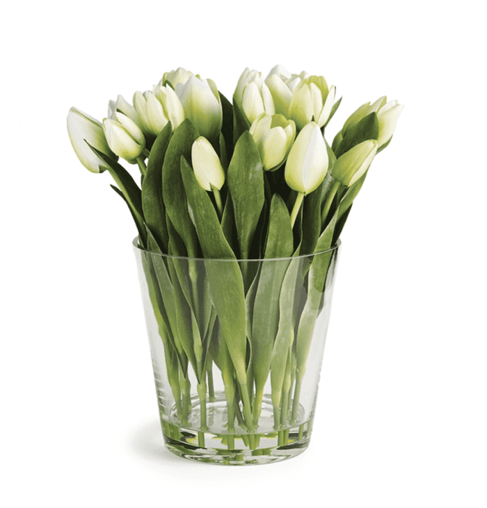 "Dutch White Tuliip Arrangment in Vase 15""h"