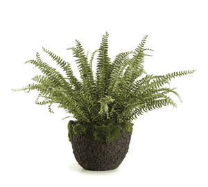 "Grand Boston Fern 30"" Drop-In Greenery"