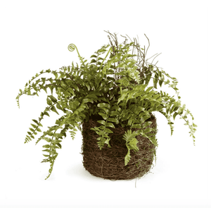 "Small Boston Fern 12"" Drop-In Greenery"