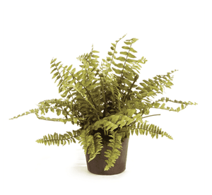 "Boston Fern Potted Drop-In 12"" Greenery"