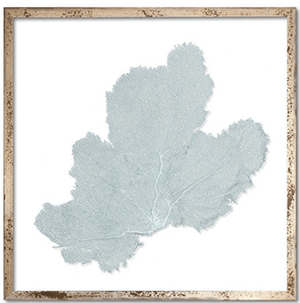 Framed Custom Sea Fan Art (multiple sizes & colors) Wall Art