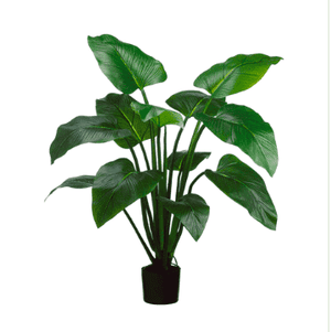 Eva Curcuma Plant in Pot - 4' Greenery
