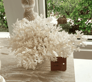 Small Lace Coral Coral