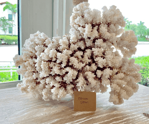 Brown Stem Coral Coral