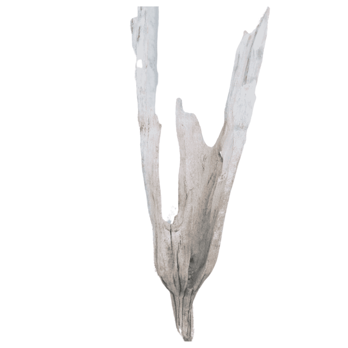 Driftwood Cone 06