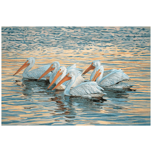 Floating White Pelicans Giclee Art