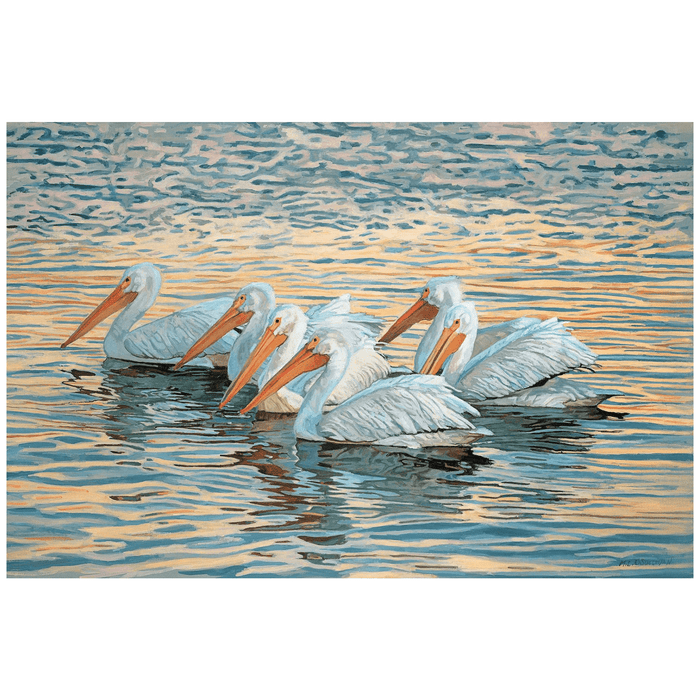 Floating White Pelicans Giclee