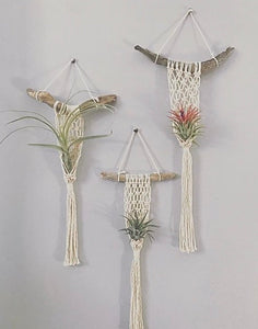Macrame Air Plant Holder