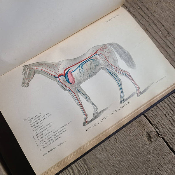Diseases of the Horse Book, 1903