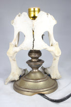 Load image into Gallery viewer, Animal Bone Lamp with Brass Candlestick Base