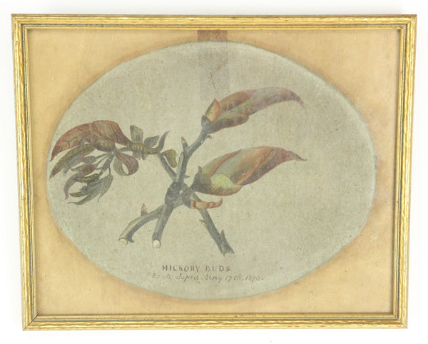 Hickory Buds Original Painting by David Clarkson East, 1873 - 10.25 x 8.25""