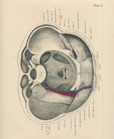 Matted Antique (c.1897) Anatomy Print, Plate L: Lower Abdomen & Pelvis