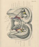 Matted Antique (c.1897) Anatomy Print, Plate LVII: Female Internal Sexual Organs
