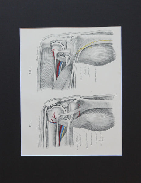 Matted Antique (c.1897) Anatomy Print, Plate LXXI: The Knee Joint, Bent