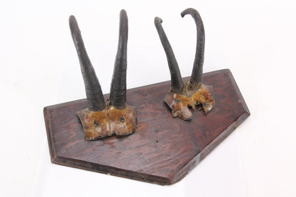 Antique Double Taxidermy Mount with Goat Horns and Skull Caps on Shield