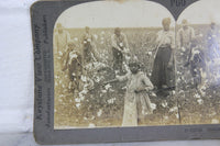 Gathering Cotton on a Southern Plantation, Dallas, Texas - Keystone Stereo Card