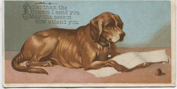 "Lying Dog Antique Trade Card - 5"" x 2.5"""