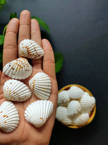Textured Sea Shells (10 Pieces)
