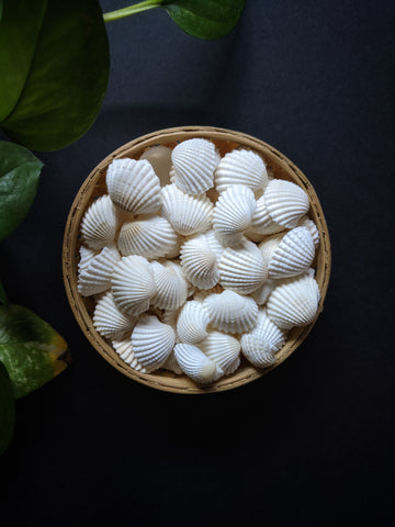 White Sea Shells (50 Pieces)