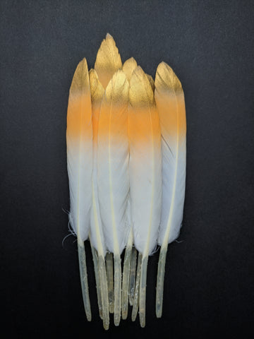 Neon Orange - Golden Tipped Goose Feathers (10 Pieces)
