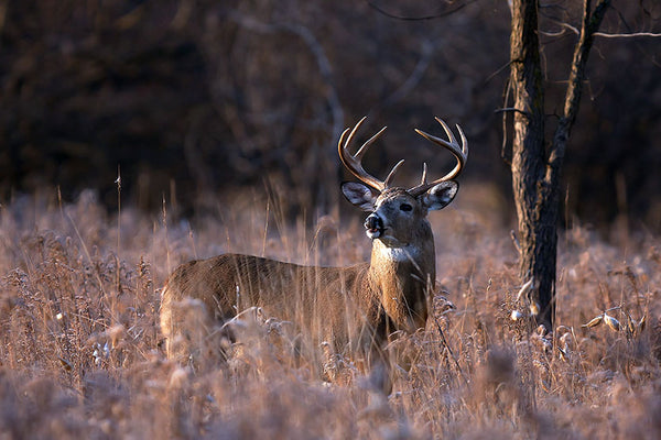 Off-Season Prepping Tips For True Deer Hunters