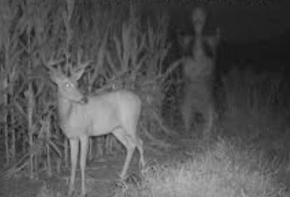 9 REAL Creepy Trail Cam Capture Moments You Have to Watch!