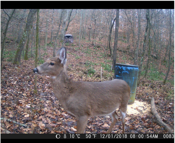 How To Protect Farm From Zombie Deer Virus (CWD) With Hunting Cameras
