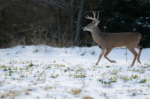 6 Expert Tactics: For Late-Season Deer Hunting