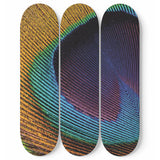Peacock Eye Skateboard Wall Art