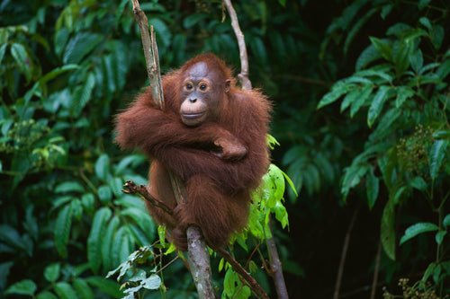 Are we losing momentum in the campaign against Palm Oil?