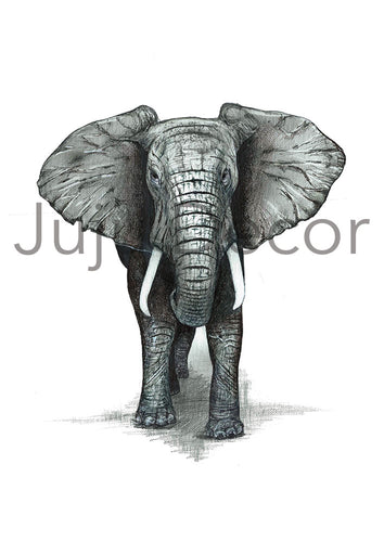 Illustration Print - African Elephant