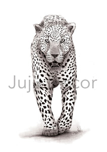 Illustration Print - African Leopard
