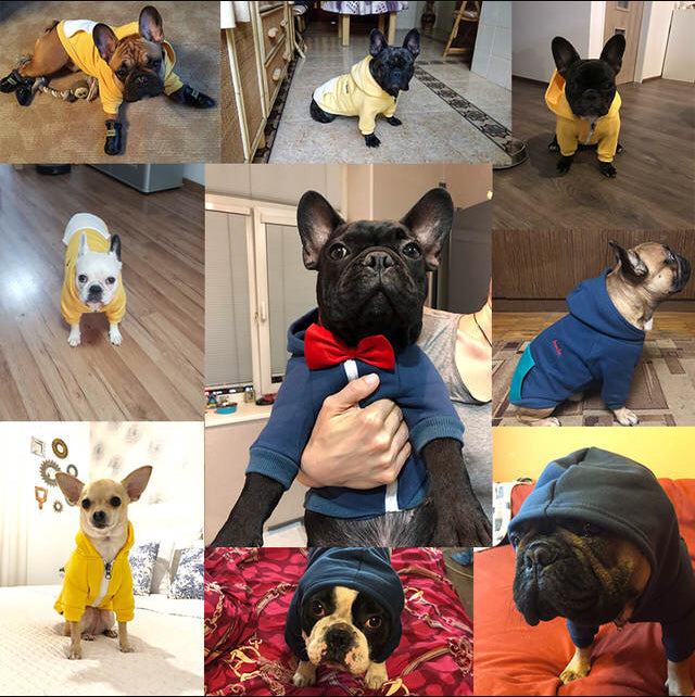 French Bulldog Hoodie With Zip (two color options)