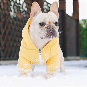 French Bulldog In The Snow Wearing A Yellow And White Hoodie With Zip