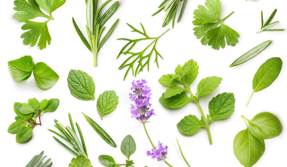 5 Herbs You Need This Monsoon Season