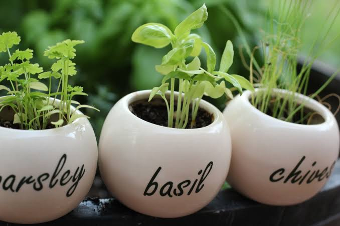 3 EASY WAYS TO GROW YOUR OWN FOOD