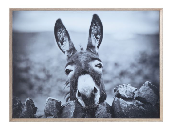 Framed Canvas Wall Decor with Donkey