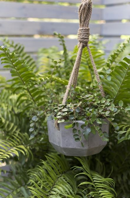 Ely Hanging Planter