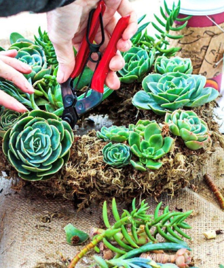 Succulent Wreath Workshop Sunday, November 24th