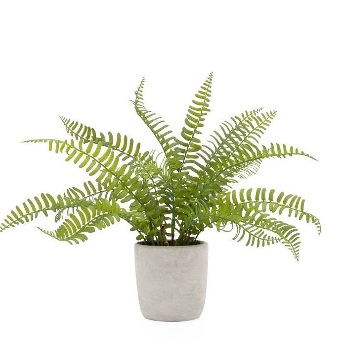 Potted Boston Fern Faux Plant