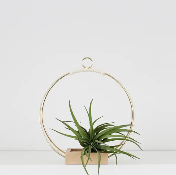 Copper Wire & Wood Plant Hanger - 3 Sizes