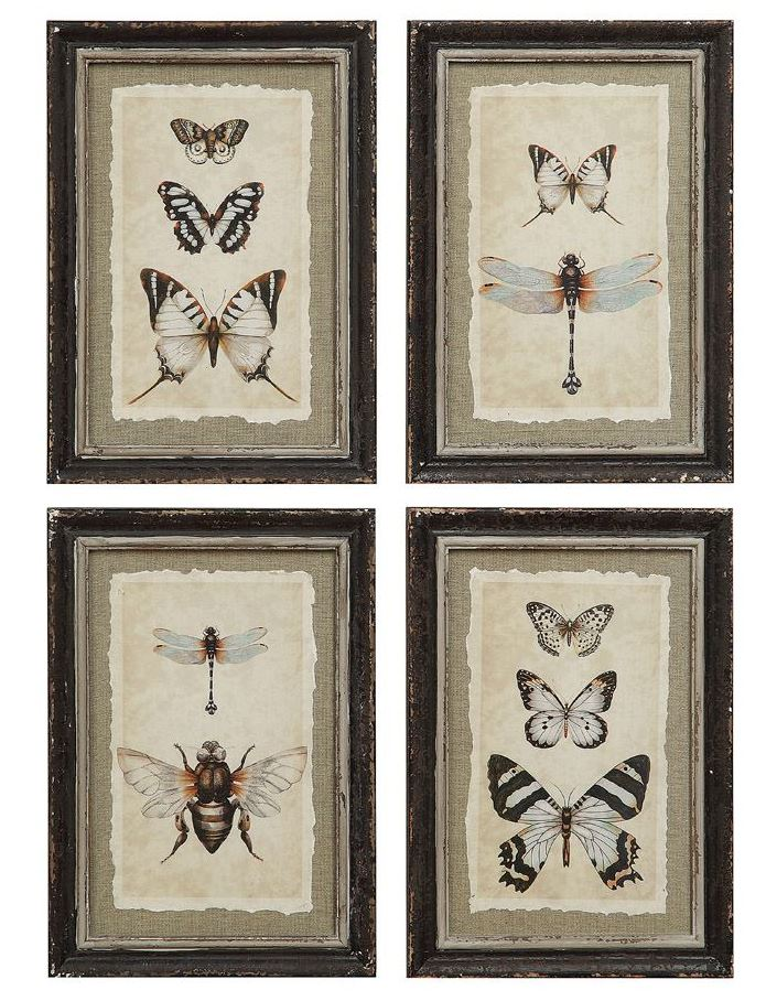 Wood Framed Vintage Reproduction of Insect Print - 4 Styles