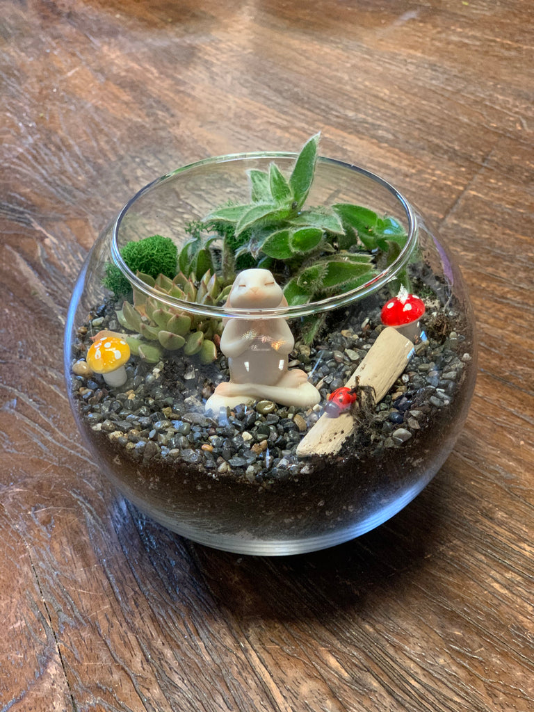 Tansy - Terrarium To Go Kit