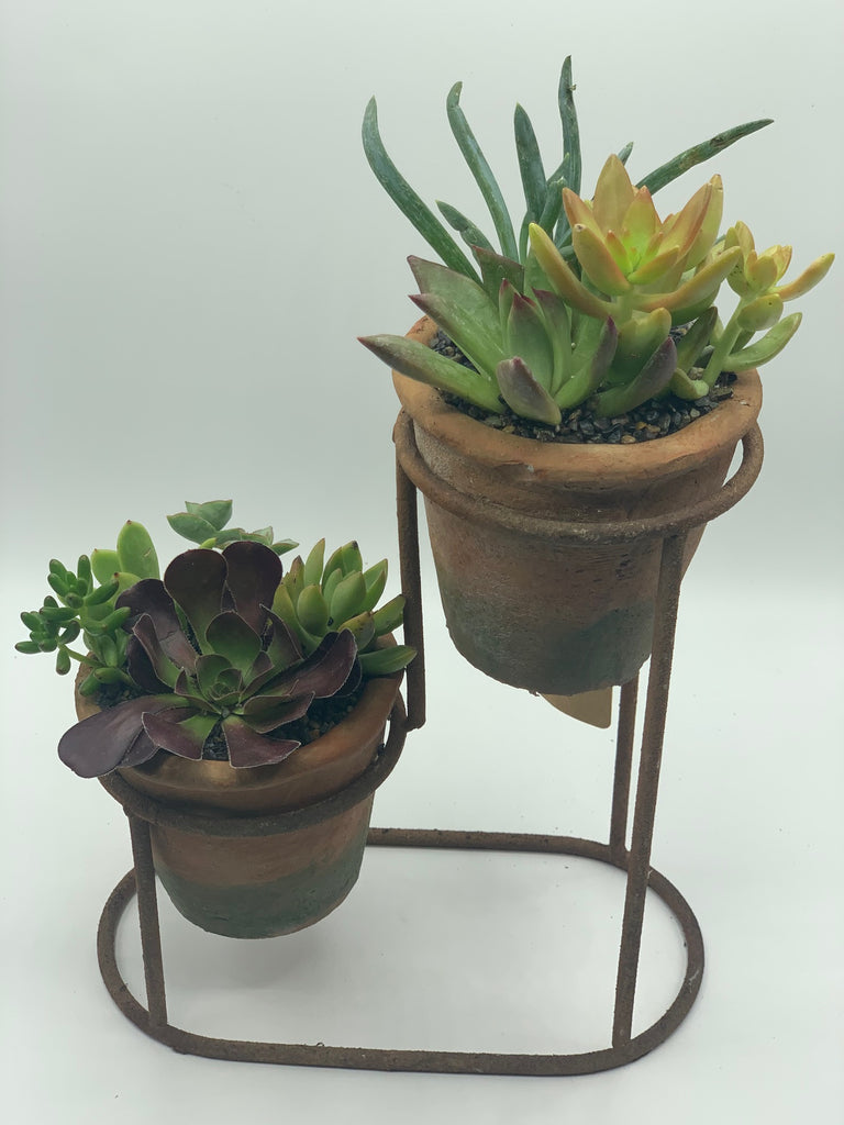Succulent Arrangement in Two Tiered Terra Cotta Planter