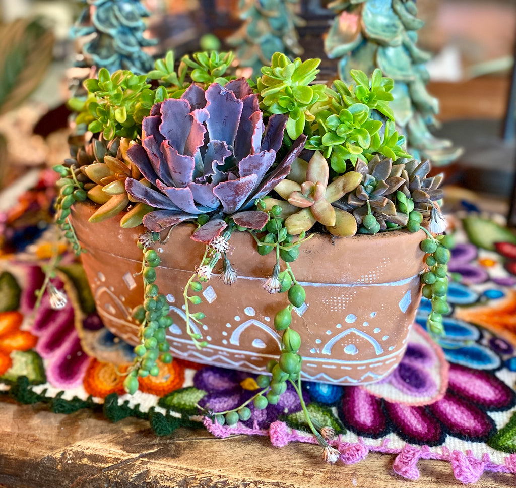 Terra Cotta Double Planter with Succulents