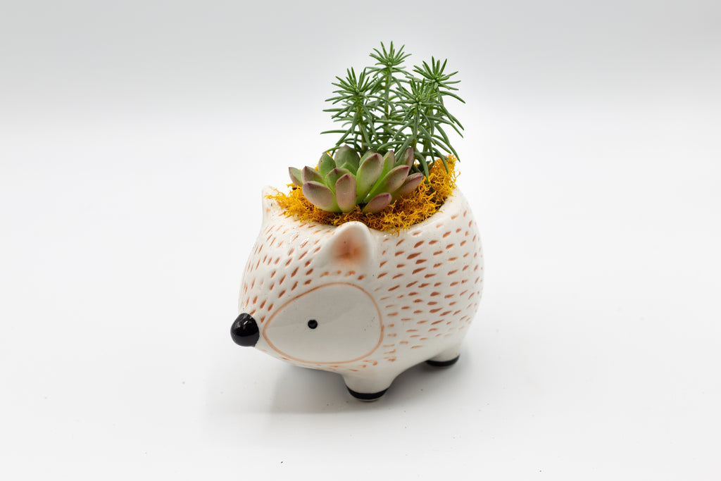 Succulent Arrangement in Hedgehog Planter