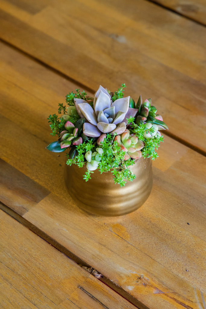 Small Tegan Pot With Succulents