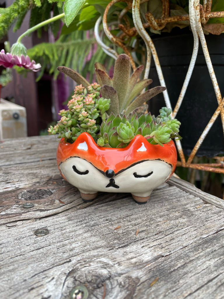 Troxy Ceramic Fox Planter With Succulent