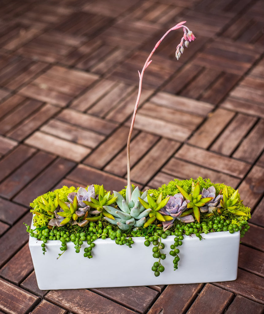 Large Ella Succulent Arrangement